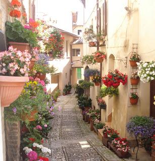 Święto kwiatów w Spello