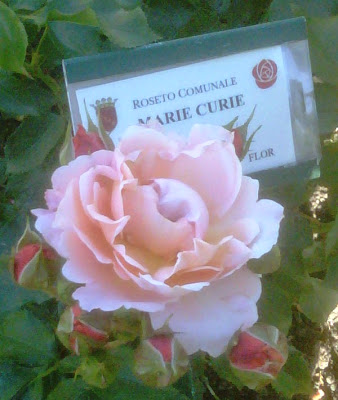 Święto róż w rzymskim Ogrodzie Różanym