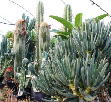 Królestwo kaktusów w Apulii