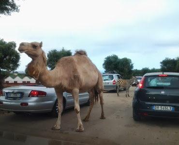 Park safari w Fasano. Dziennik apulijski cz.2