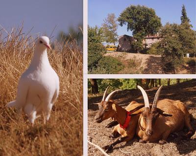 Na farmie Ma' Falda, w zielonej Umbrii
