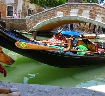 Z psem na wakacje do Włoch. Yes, we can! :)
