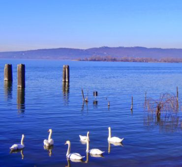 Umbria: jezioro i łabędzie