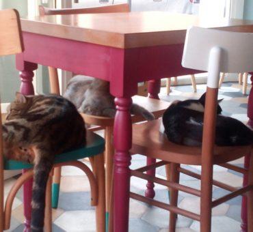ROMEow – Cat Bistrot w Rzymie