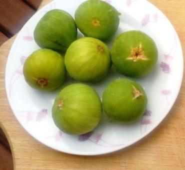 O powidłach figowych z Apulii